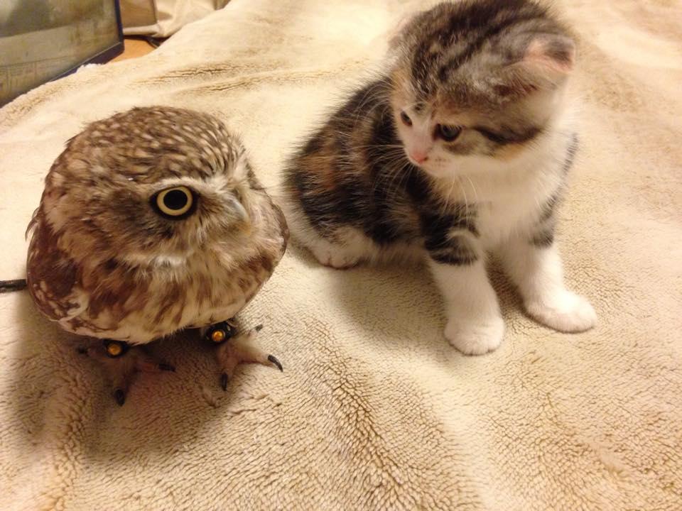 owl&kitten3