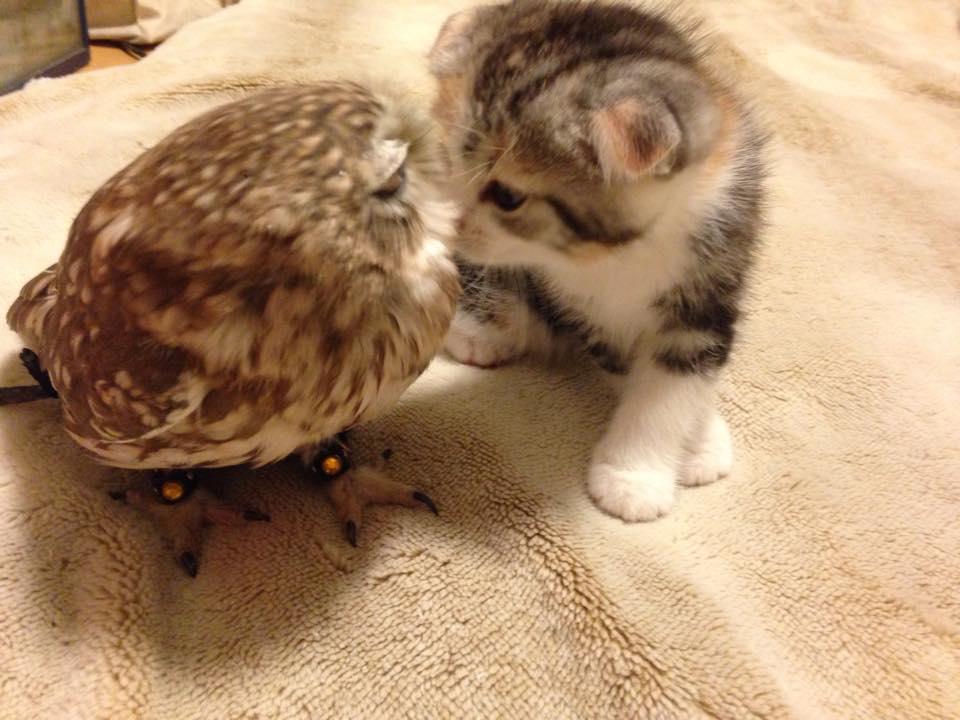 owl&kitten4