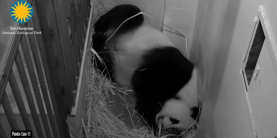 PandaWaterBreaks
