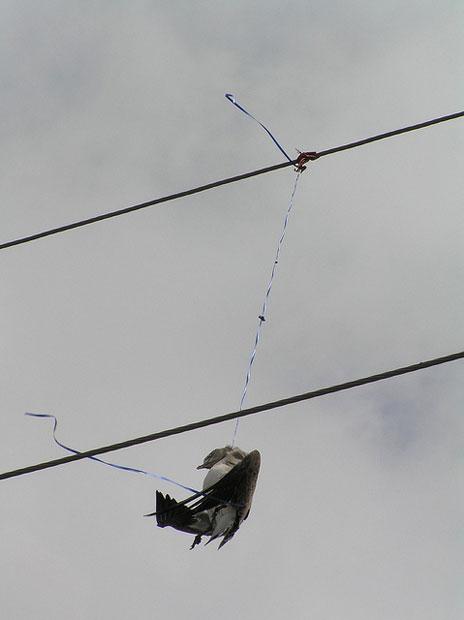 birdballoonwire