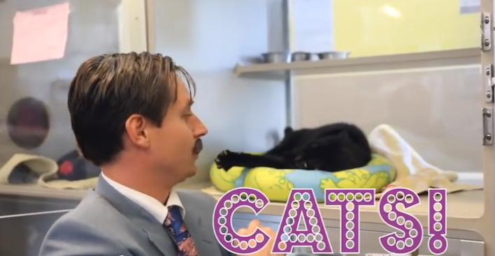 calgaryhumanesocietyusedcats