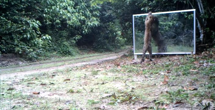 mirrorleopardhugs