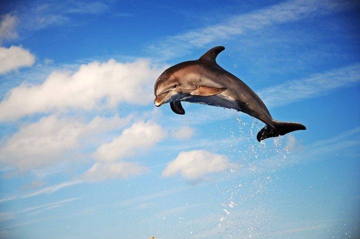 Dolphinchubbyjump
