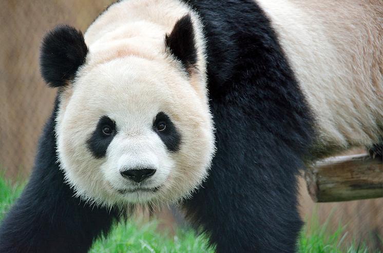 Er Shun/Toronto Zoo