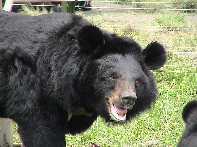 bearbileAndrew