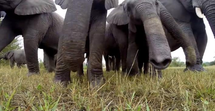 elephantbabygopro