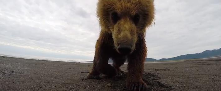 grizzlybearslaps
