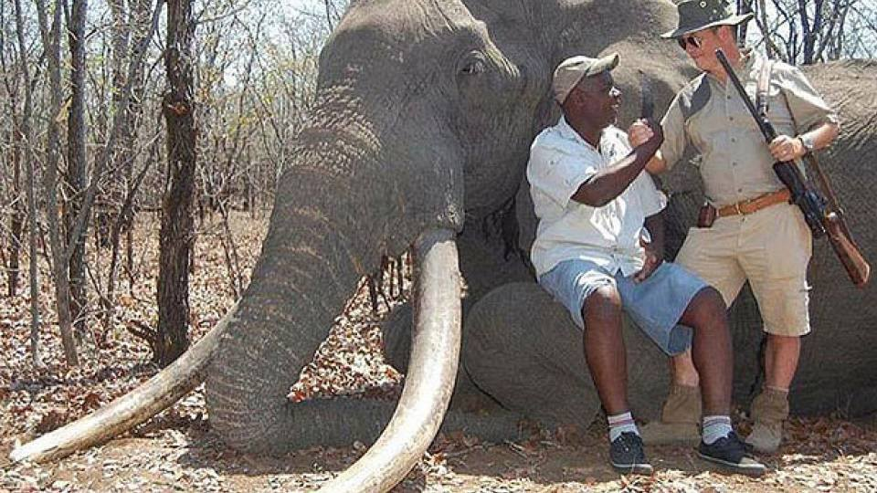 elephanthuntzimbabwe