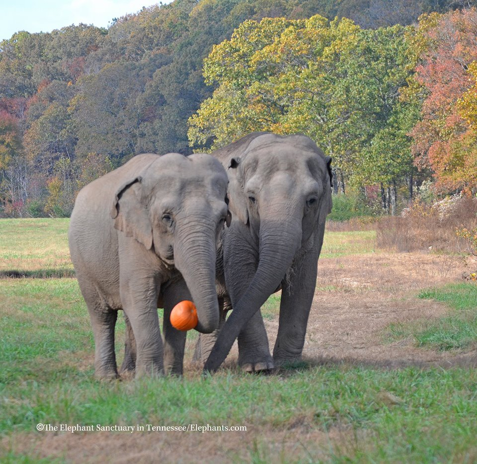 elephantspumpkin