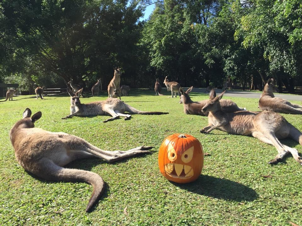 kangaroospumpkin