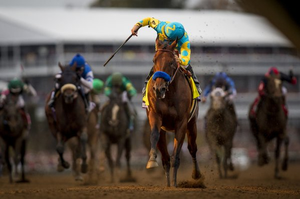"""HISTORY MADE. #AmericanPharoah has won the #GrandSlam""/Breeders' Cup/Twitter"