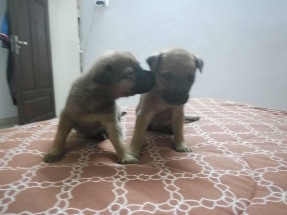 PuppiessavedsnakeHSI