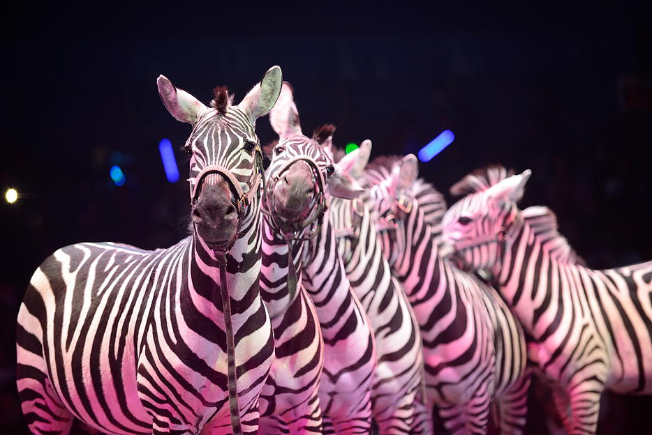 The Black and White show at UniverSoul Circus