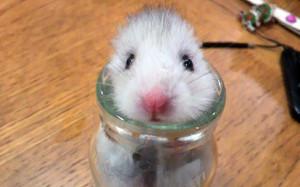 potd-hamster-bottl_3505465k