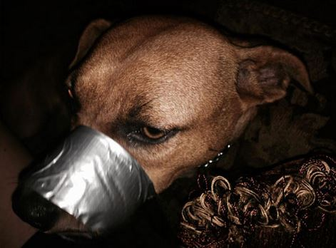 648417-woman-duct-tapes-dogs-mouth-shut-posts-pics-on-facebook-8cb9f
