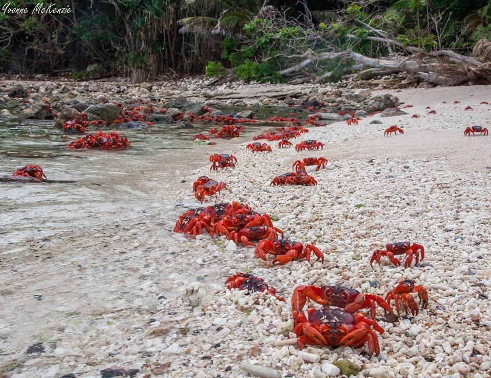 crabsWondrousWorldImages