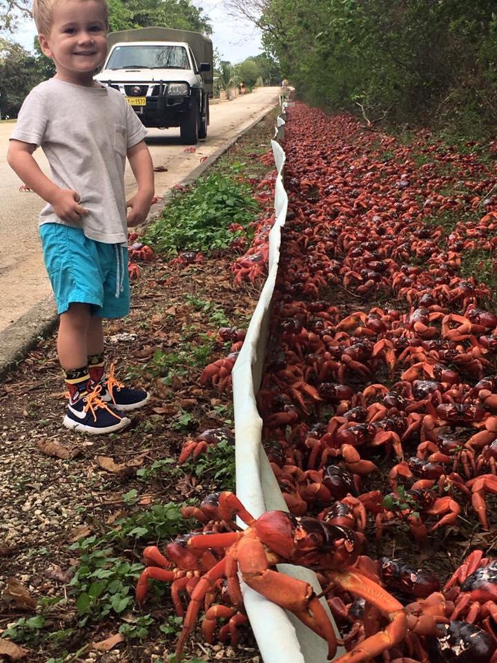 crabsbarriers