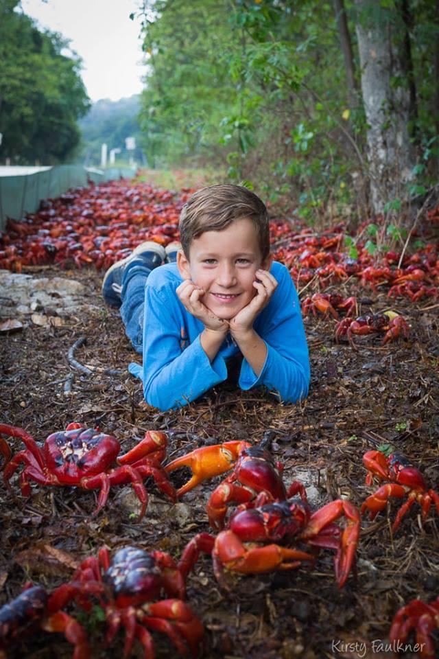 crabsboy