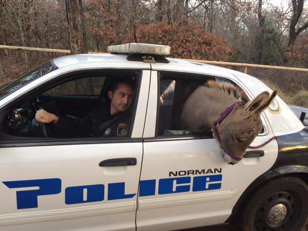 donkeypolicecruiser