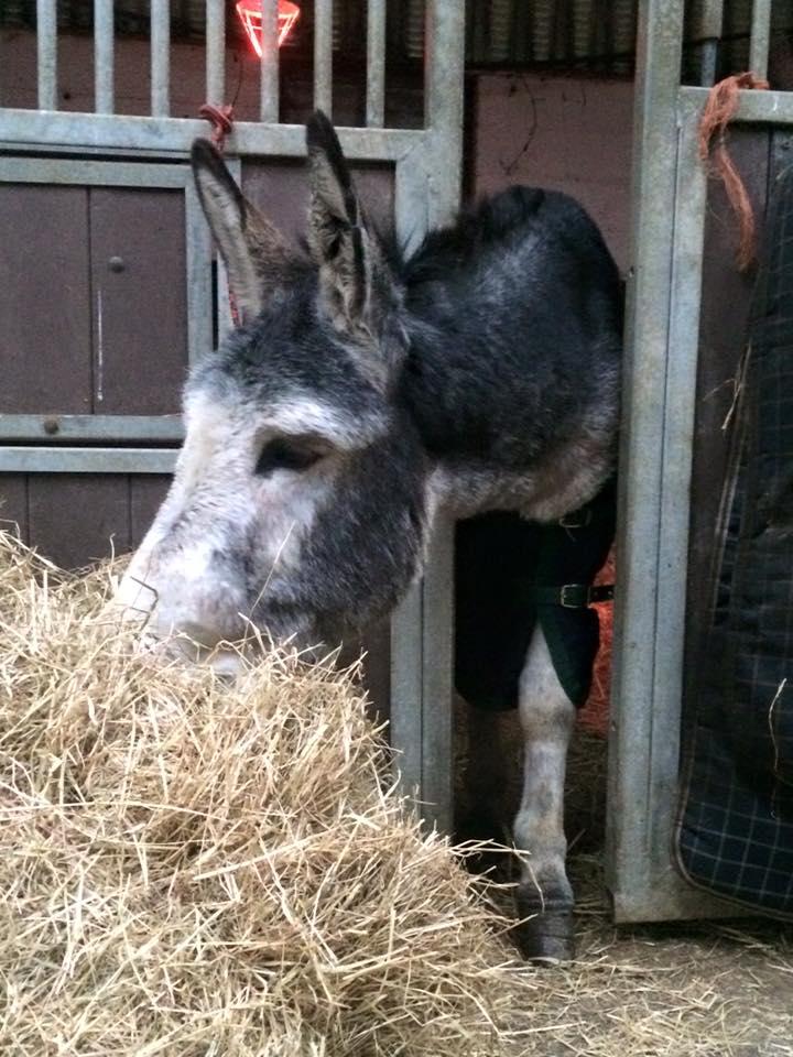 donkeyrescue10
