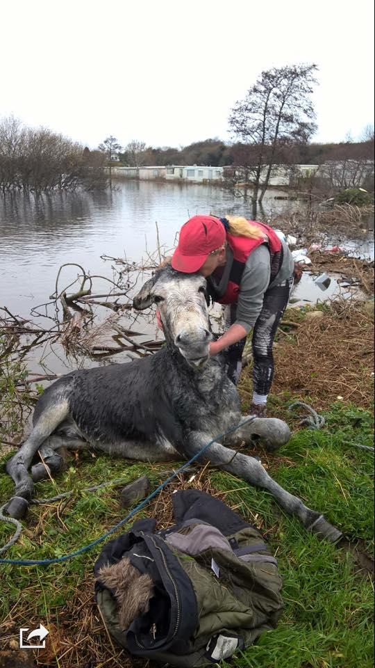 donkeyrescue2