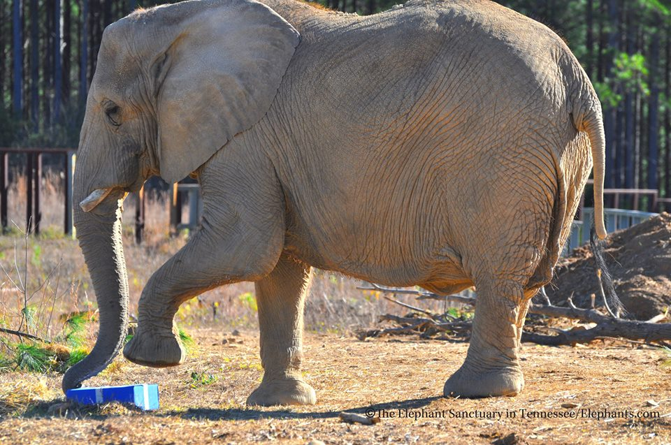 Elephant Sanctuary of Tennessee/Facebook