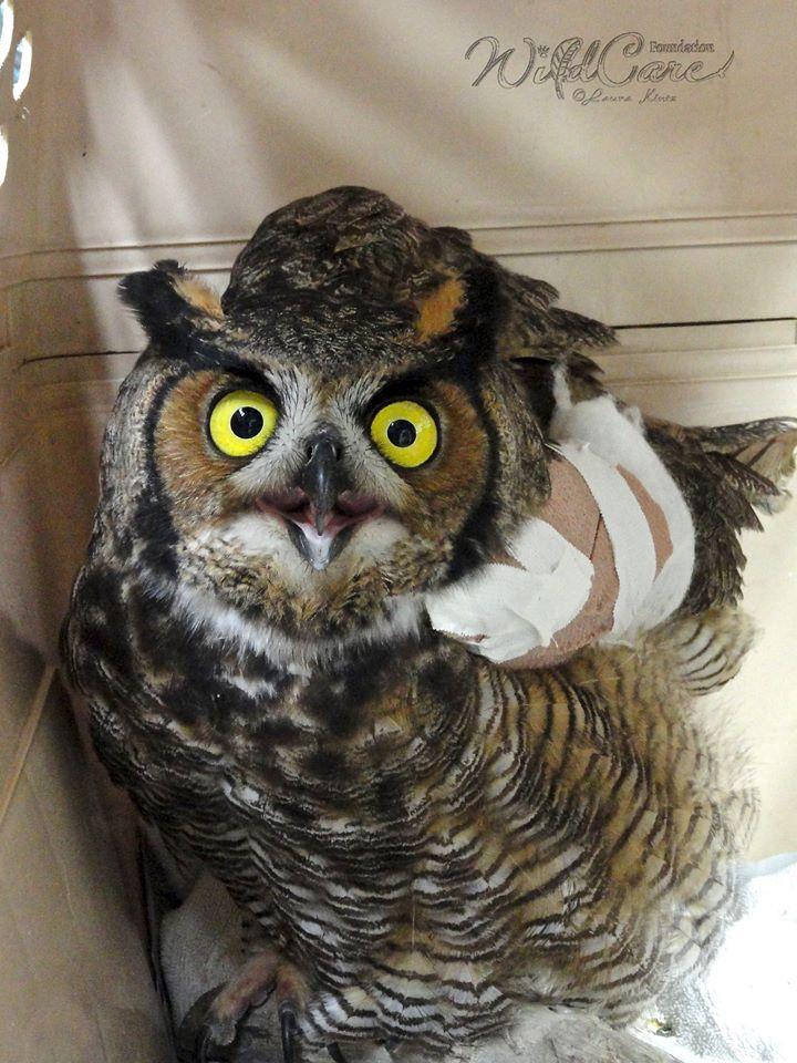 owlrescuedpolice