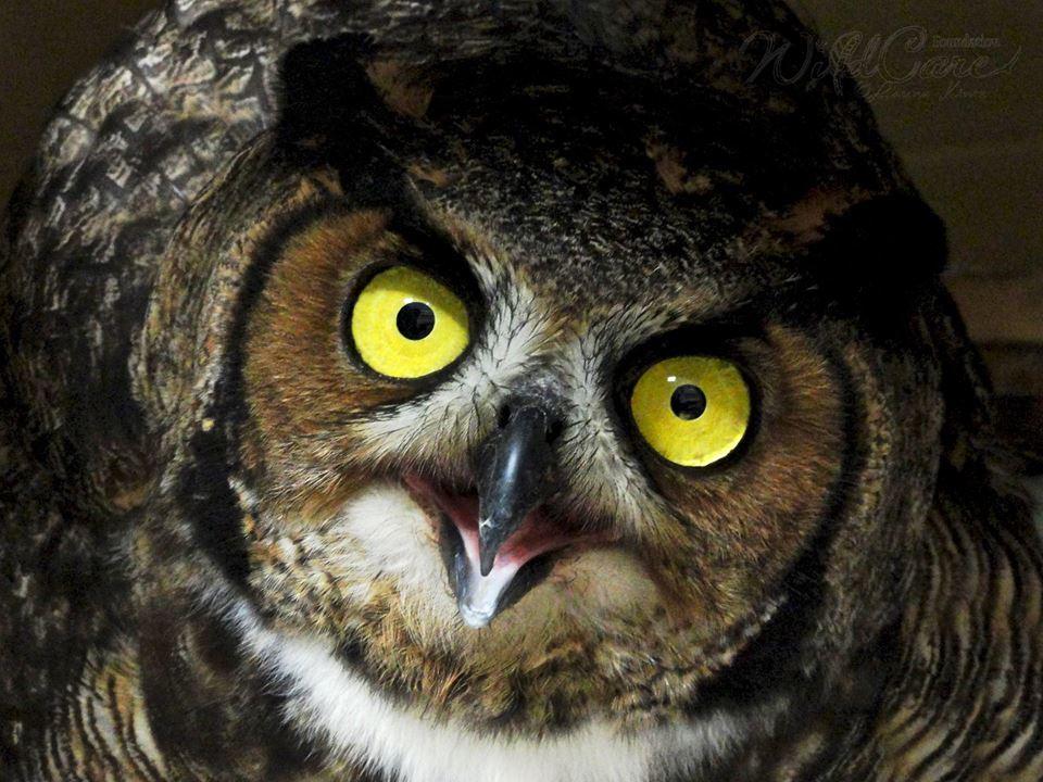 owlsaveoklahomapolice