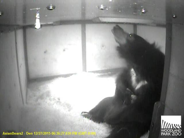 slothbearholding cub