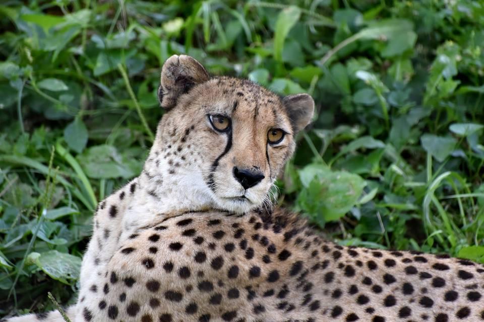 CheetahMarylandZooBalitimore