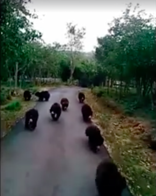 bearsfoodtruck