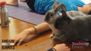 bunny-yoga-sunberry-fitness-bandaid-for-bunnies-easter