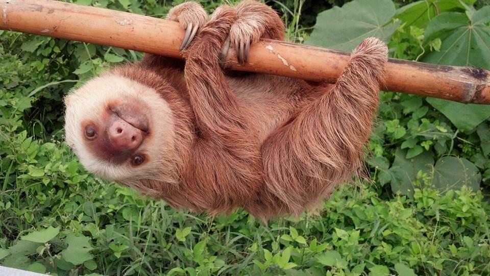 slothecuador6