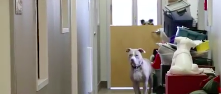 dogspuppyloveEdmonton