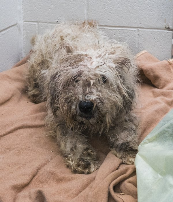 Dog saved from Langley puppy mill/BC SPCA