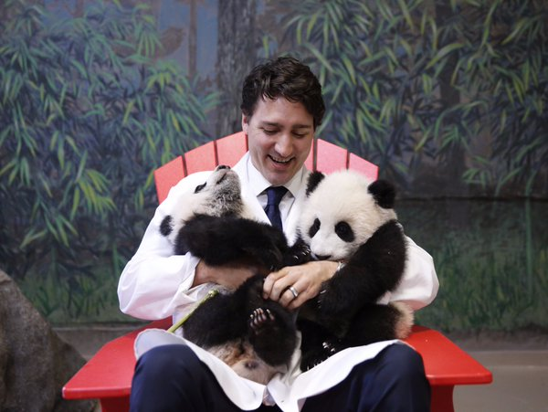 Canadian Prime Minister Justin Trudeau with twin panda cubs at the Toronto Zoo/Twitter