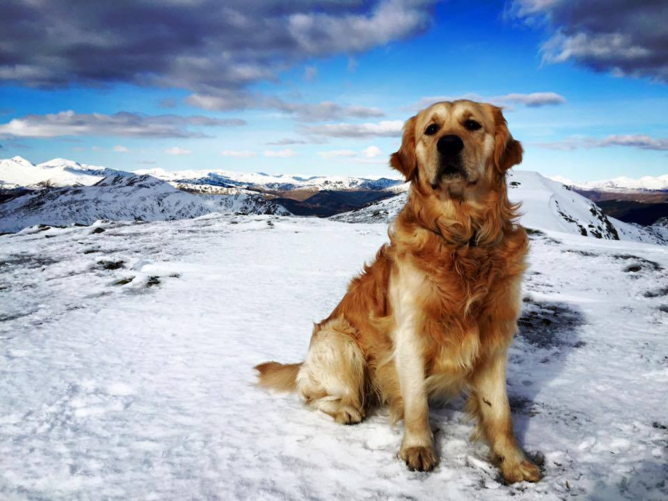 Christopher Roy posted this photo of Alfie after making it to the summit of Ben Ledi near Callander & enjoying the views across The Trossachs & The Highlands/TourismScotland/Facebook
