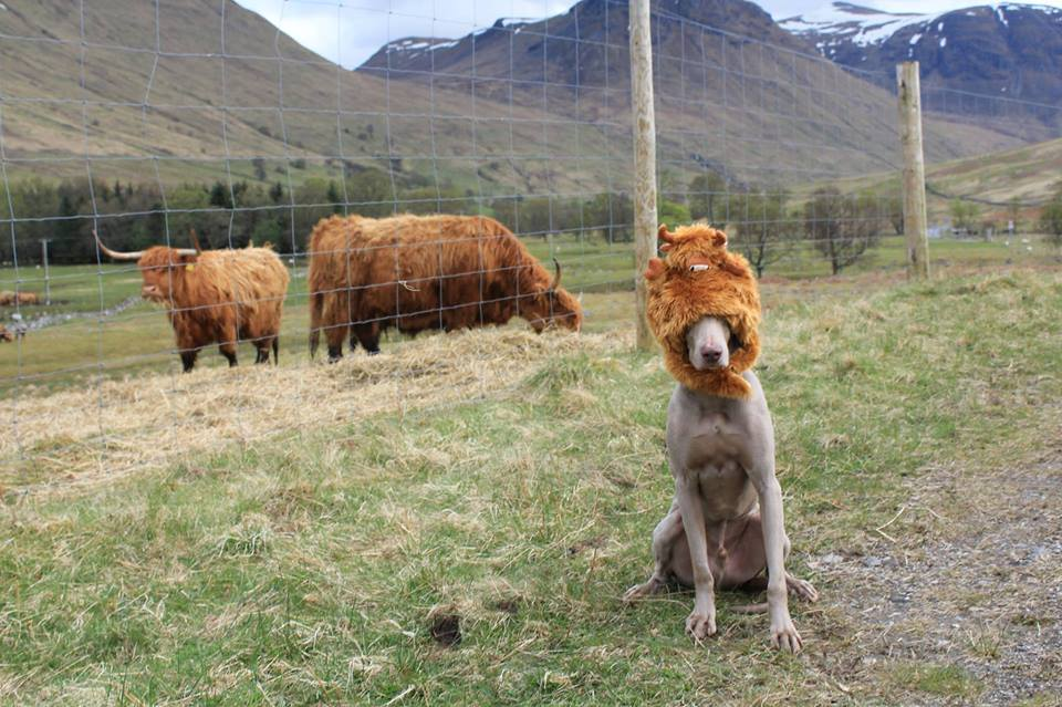 Zak Livingstone share this photo of his pooch with some livestock/VisitScotland/Facebook
