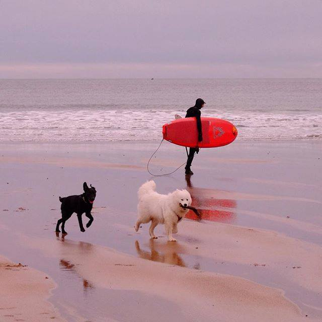 Dogs enjoying East Sands beach in St Andrews, Fife. babydirewolf / Instagram/VisitScotland/Facebook