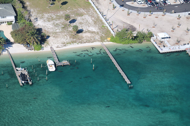 Manatee aerial seruvey in Palm Beach, FL/Amber Howell, FWC Fish and Wildlife Reserve/Flickr