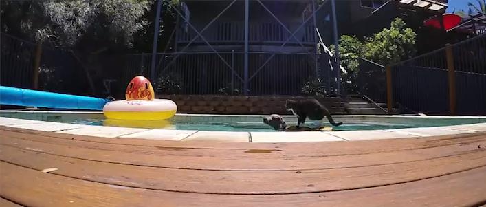 surfcatdogDidga
