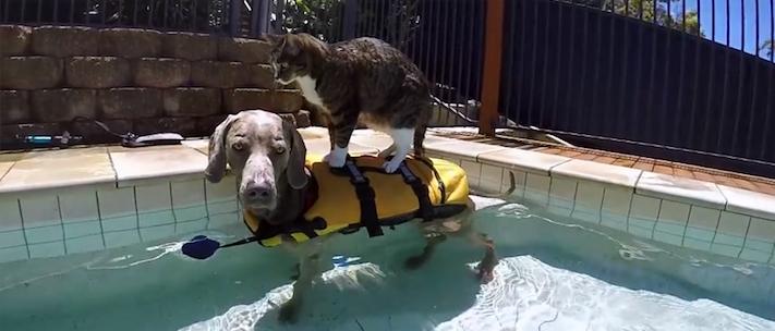 surfingcatdog
