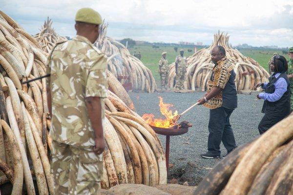 Kenya's president Uhuru Kenyatta sets ivory from poached elephants ablaze/Twitter
