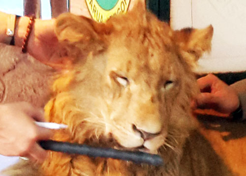 LionTamanIndonesia