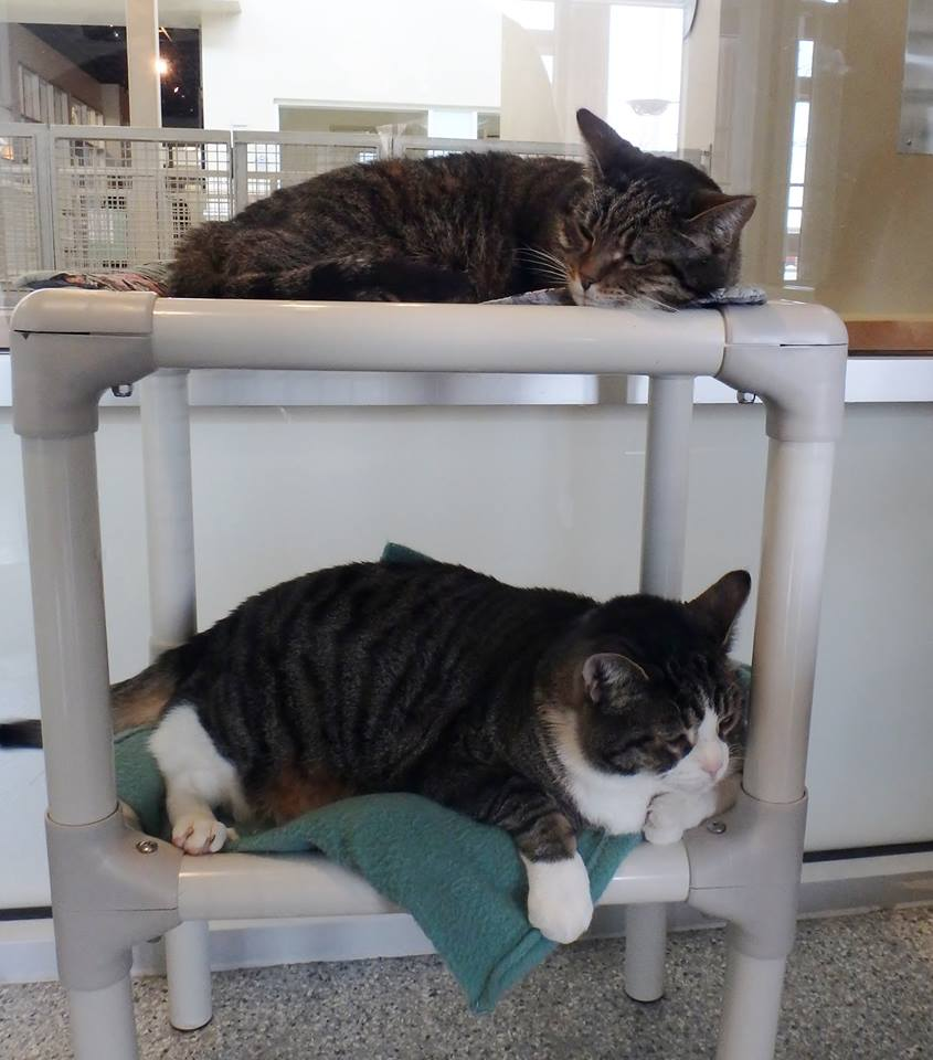 Duke and Bella are best friends at the Ottawa Humane Society/Facebook