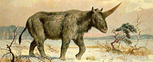 SiberianUnicorn