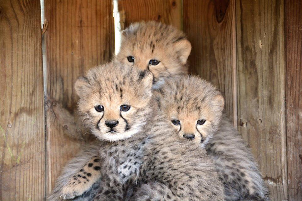Milani's cubs were born