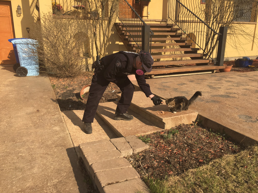 RCMP officers will do what they can to assist pets they may come across in carrying out search and rescue operations/Alberta RCMP
