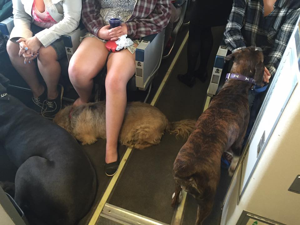 Wanda Murray captures photos of pets being evacuated from Fort McMurray/Facebook