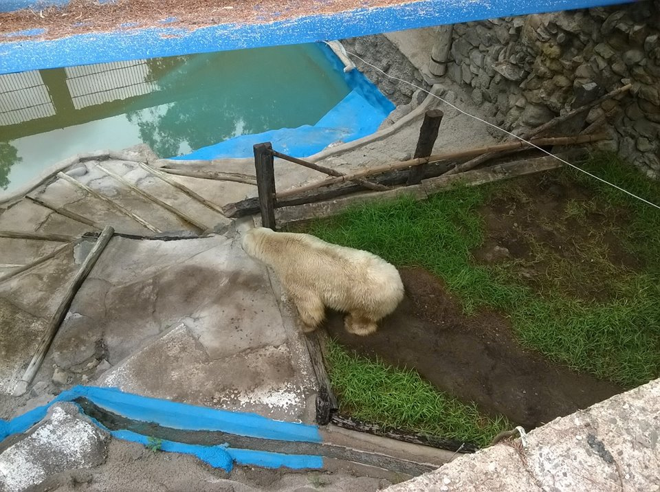 Arturo in March, 2016 posted by Free Arturo USA/Canada support/Facebook